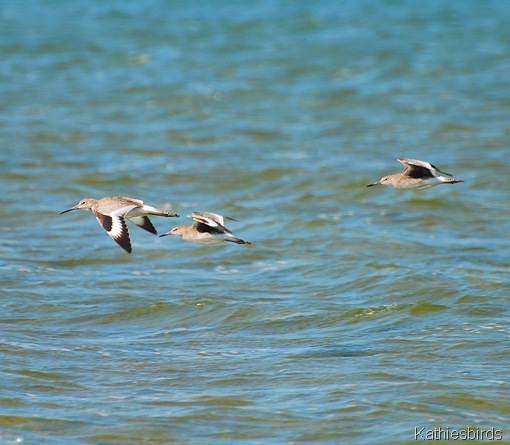 3. willets-kab
