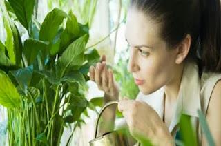 Les plantes d'intérieur toxiques