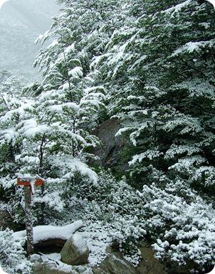 Vegetação branca pela neve