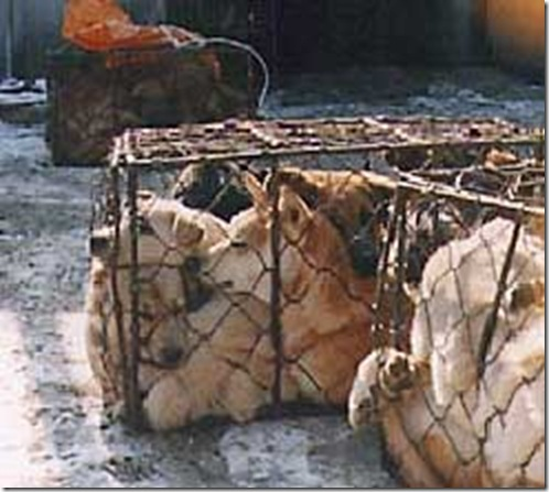 caged_dogs (1)