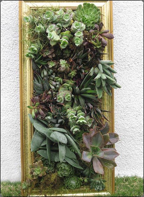 succulent-framed-art-1412  krista jon