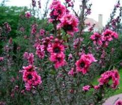 Como dise ar un jard n peque o dise o y decoracion de for Disenar jardines online gratis
