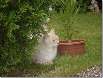 2012_07 Blumen im Garten (15)