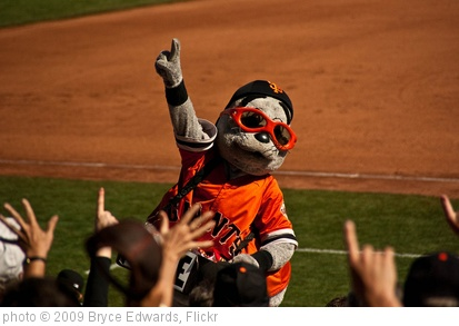'Lou Seal' photo (c) 2009, Bryce Edwards - license: http://creativecommons.org/licenses/by/2.0/