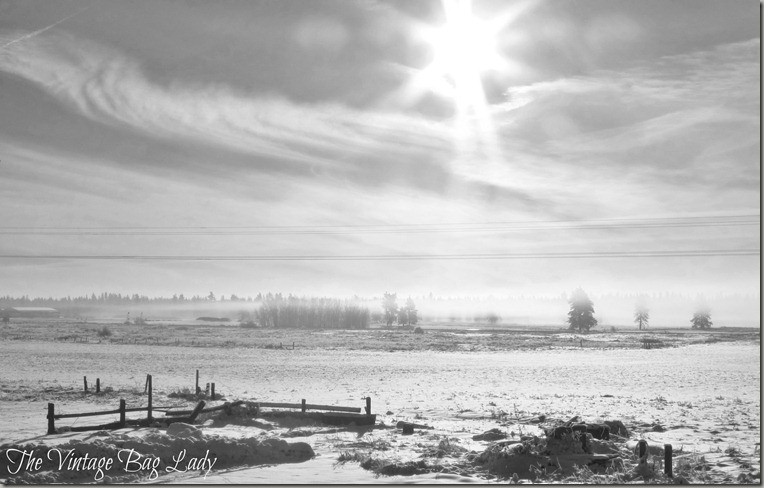 winter sunshine 009 (3)