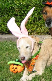 Of course Doc had been the bunny the previous year....