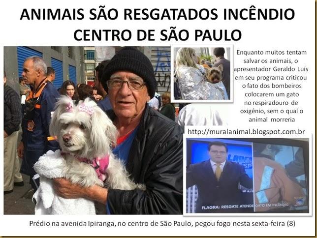 ANIMAIS SÃO RESGATADOS INCÊNDIO CENTRO DE SÃO PAULO