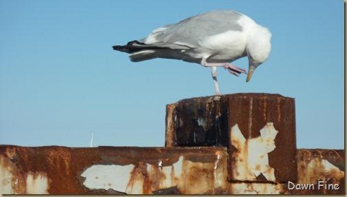 Cape Cod_011
