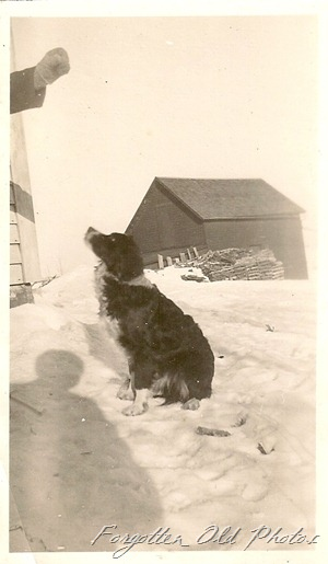 Dog in snow Solway Antiques