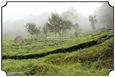 MNR_304_DSC0019_www.keralapix.com