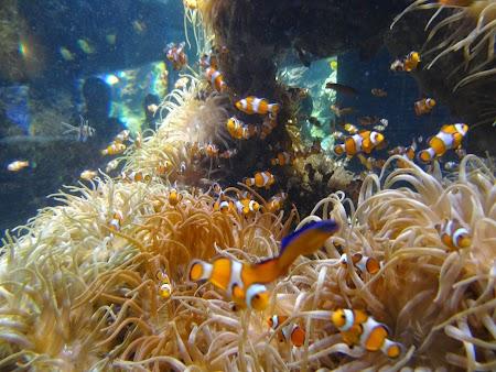 29. Nemo.JPG