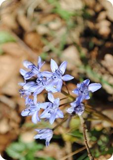 lente voorbode