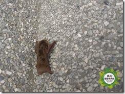20120315員山生態教育館-蝙蝠收容 (3)
