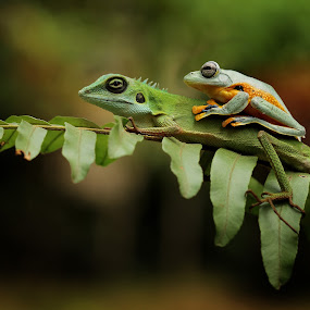 Friendship by Roem Hasadi - Animals Amphibians ( macro, lizard, frog, green, indonesia, funny, animal )