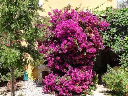 09. Flori in Corfu.JPG