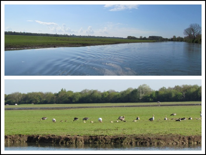 B Port Meadow Compend