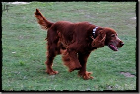 Perros (2)