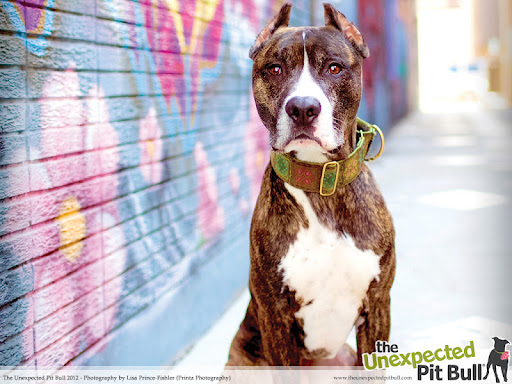 Prolific pit bull painters like Kane (above), stand by puzzled as humans took credit for his breathtaking mural- a well known urban piece believed to be among the most visited art installations worldwide. Photo of Kane by Lisa Prince-Fishler