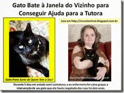 Gato_Bate_Janela_do_Vizinho_para_Conseguir_thumb_1_[3]