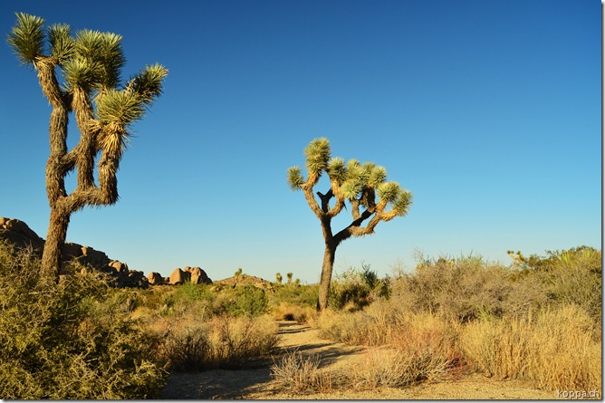 110927 Joshua Tree NP (19)