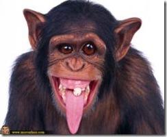 Monyet Lucu