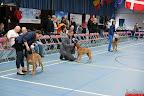 20130511-BMCN-Bullmastiff-Championship-Clubmatch-1491.jpg