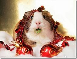animales navidad (3)