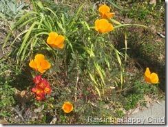 Mar28_Flowers