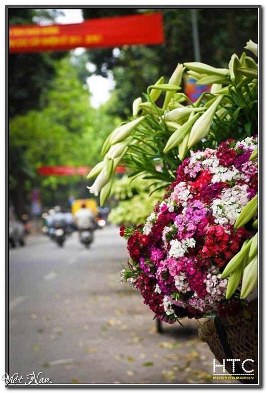Khoảnh khắc Hà Nội bốn mùa, Việt Nam