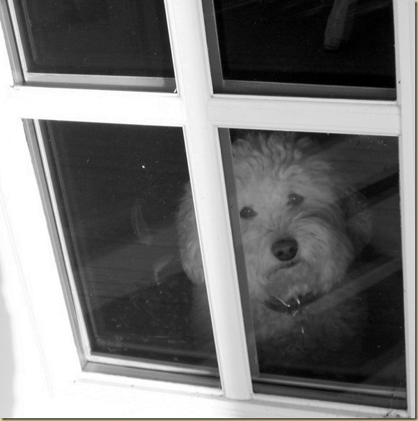 boo looking out