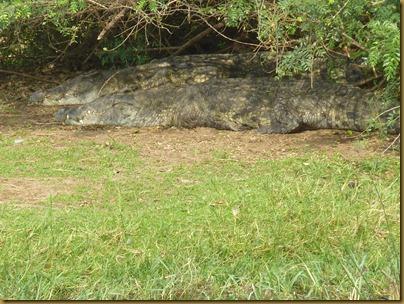 Ziwa, Murchison Falls trip 478