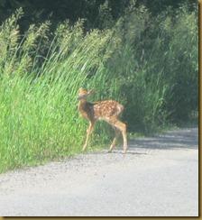 2011-6-19 fawn ontario canada (534x582)