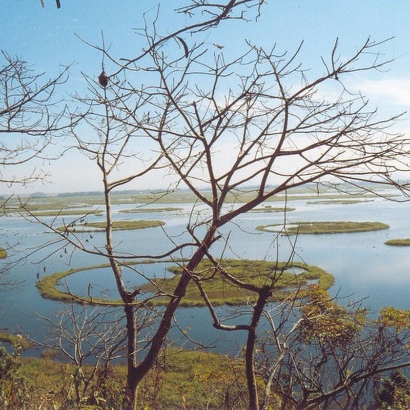 Floating Phumdis of Loktak Lake, India