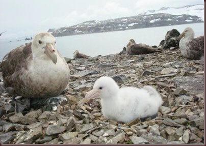 Amazing Pictures of Animals photo Nature exotic funny incredibel Zoo.Antartida (2)