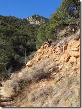 Madera Canyon Mar 19 023