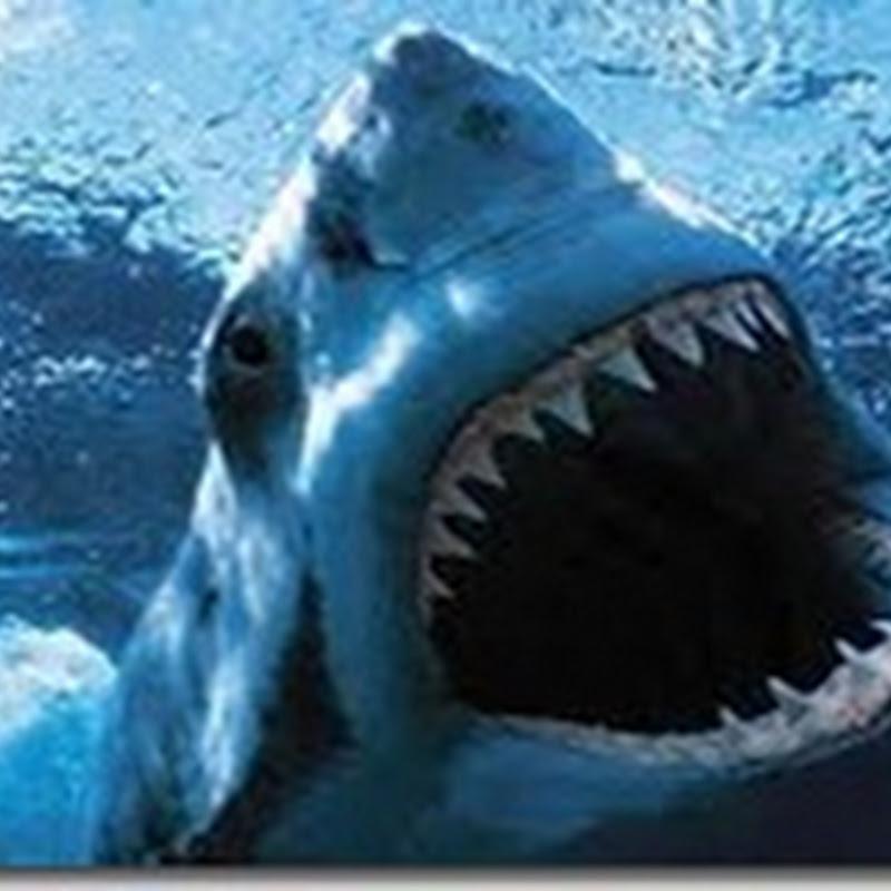معجزة الشفاء في أسماك القرش !!ا
