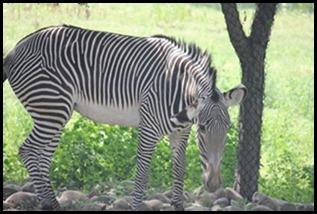 Zoo5 057