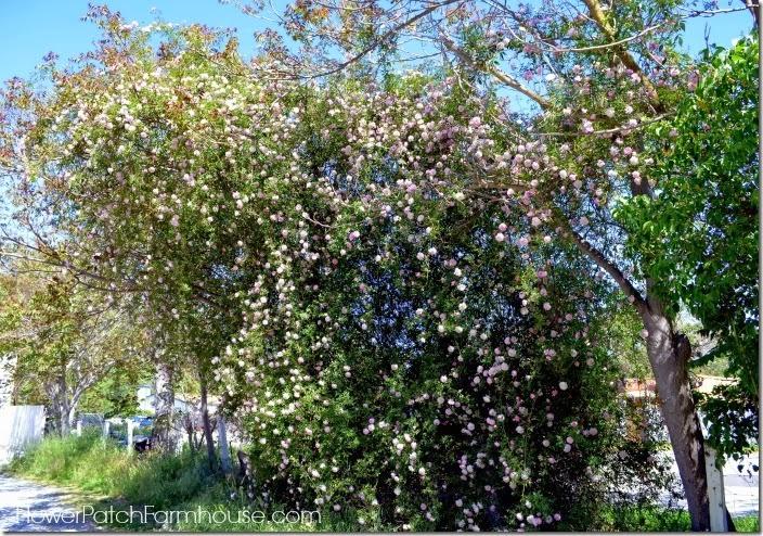 roses in tree