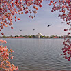 Washington DC - Tidal Basin