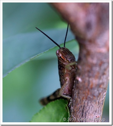 Grasshopper_2_10213_IMG_6763