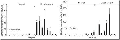 BRCA1-adnsat