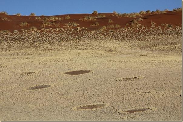 Mystérieux cercles de fées en Namibie (7)