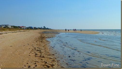 edisto beach_030