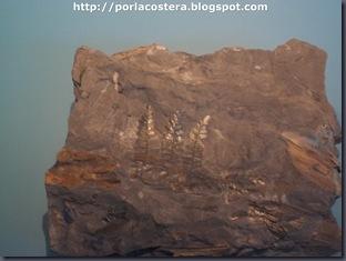 fosiles (2)