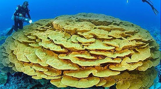 corals-coral-reefs