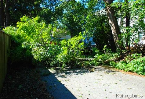 9. fallen tree-kab