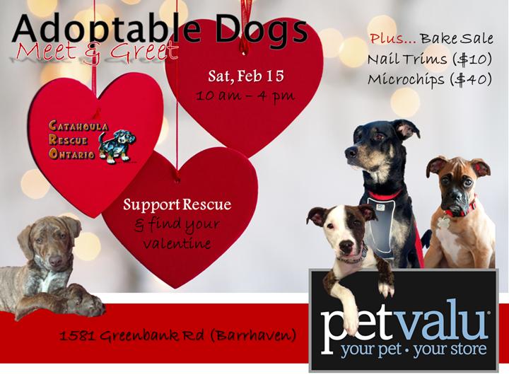 DraftPoster Pet Value Feb 15 CRO