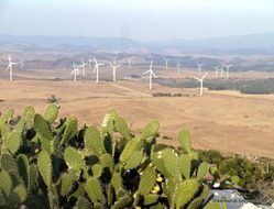 wind turbines and prickly pear
