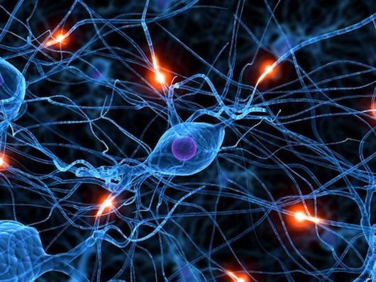 Самые необычные теории о происхождении интеллекта