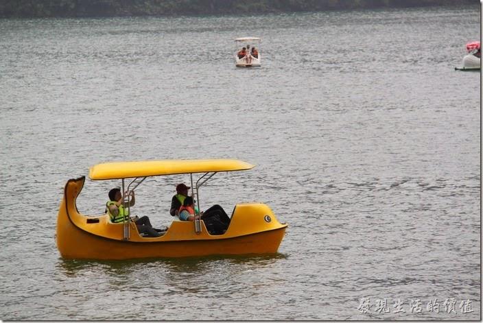 花蓮-鯉魚潭紅面番鴨。除了一般的天鵝船之外,這艄應該事「企鵝」船吧!